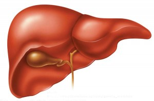 11 Podstawowych zasad warunkujących poprawę funkcjonowania wątroby