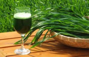 jak uprawiać młody zielony jęczmień